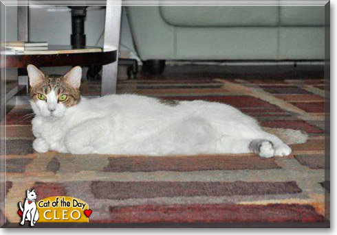 Cleo, the Cat of the Day