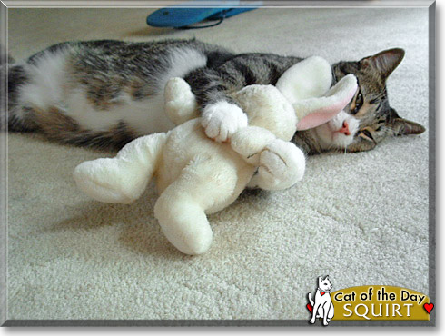 Squirt, the Cat of the Day