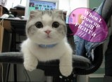 cute kitty speaks out about a pink collar