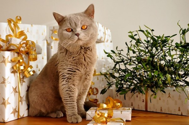 Cat Christmas Gifts