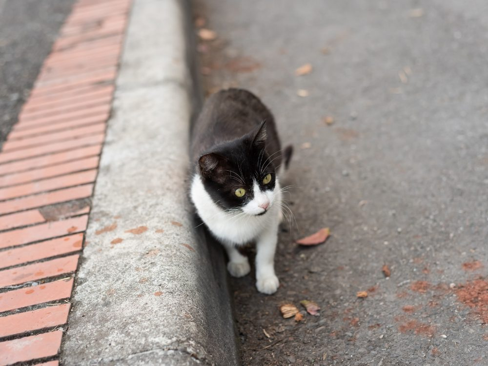 What To Do When You Find a Stray Cat