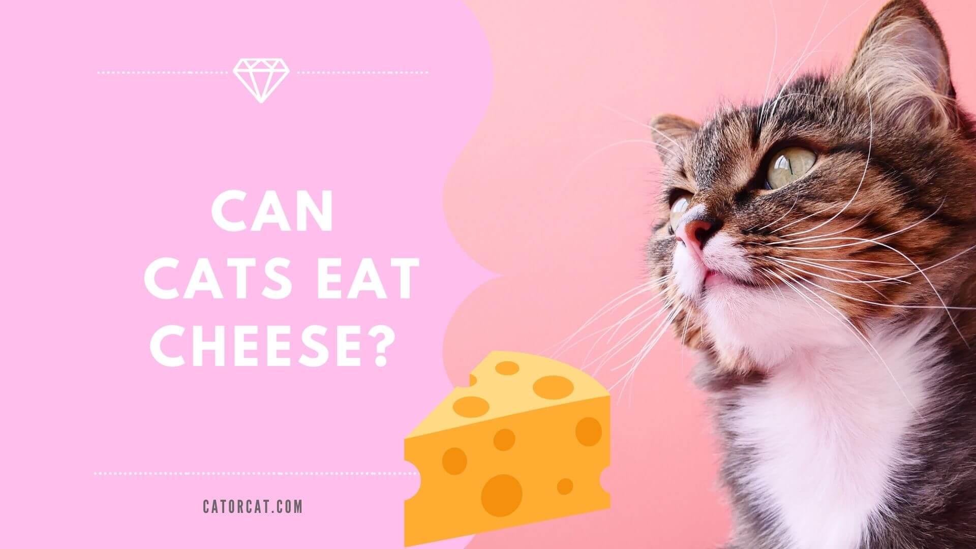 ¿Pueden los gatos comer queso?