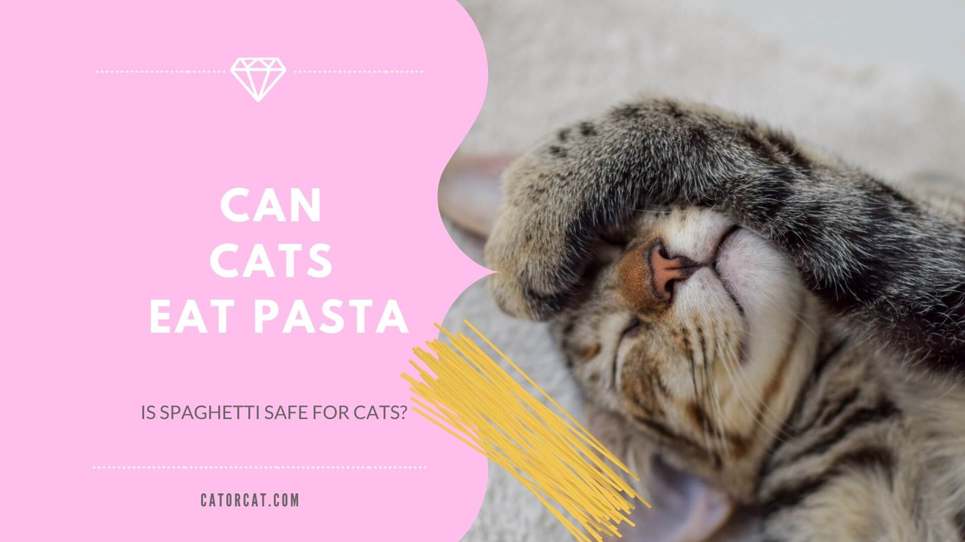 ¿El gato come espaguetis?  ¿Es la salsa de tomate segura para los gatitos?