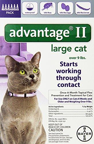 Advantage Cat Flea Uk