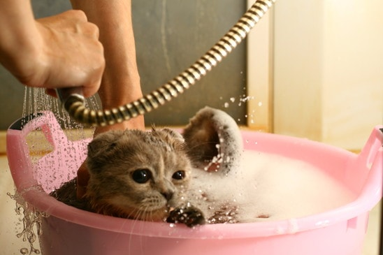 cat loves to take a bath
