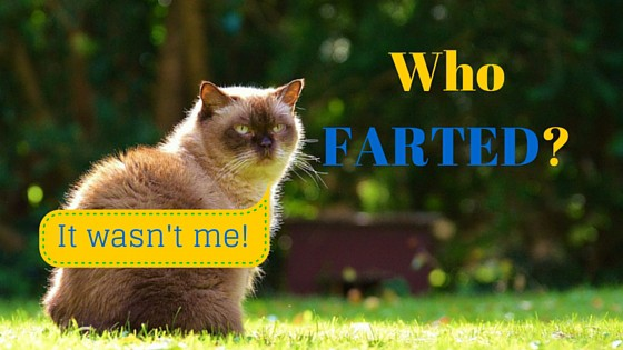 Do cats fart