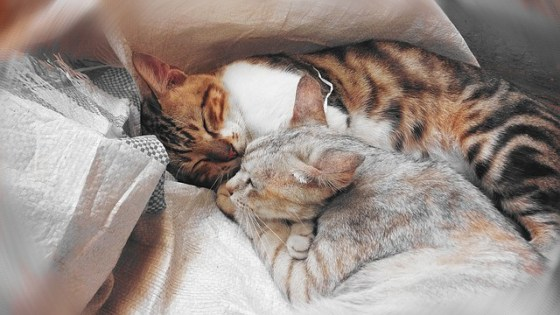 cat sleeping together