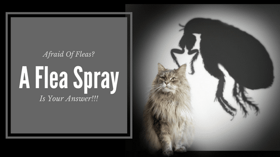 Best Flea spray for cats