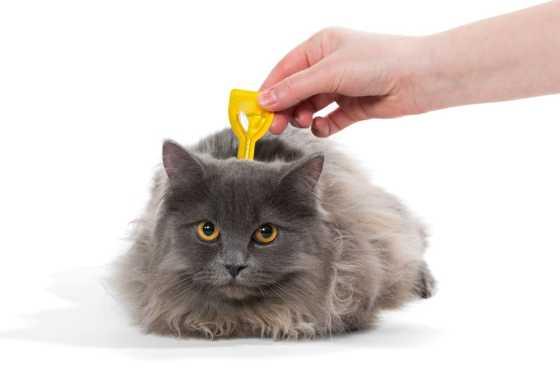 using a spot on flea treatment