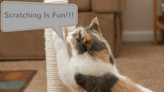 best scratch post for cats
