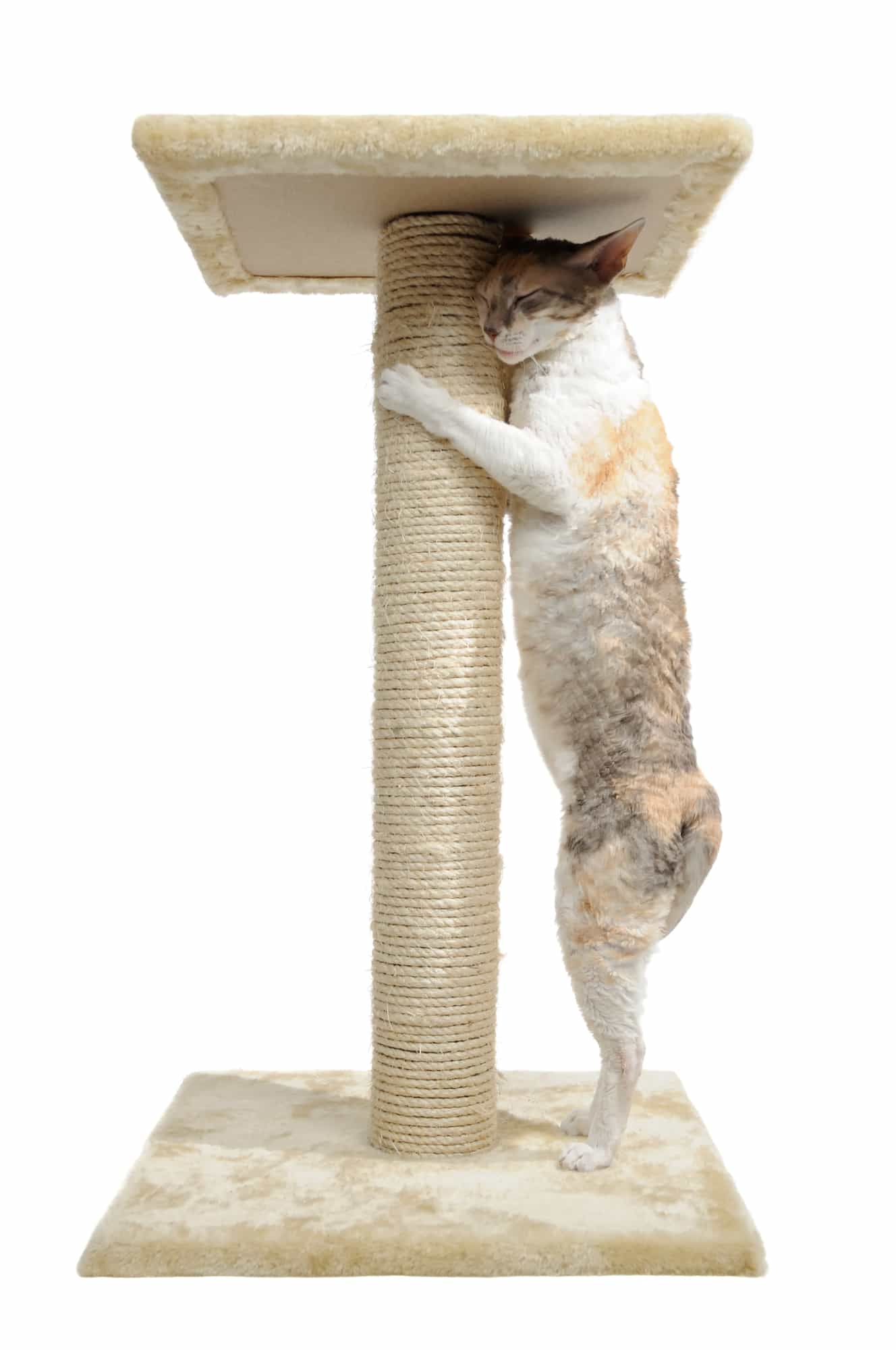 cat scratching post reviews will tell you the importance of having a scratch post at home since you canu0027t expect your cat to stop scratching - Cat Scratching Post