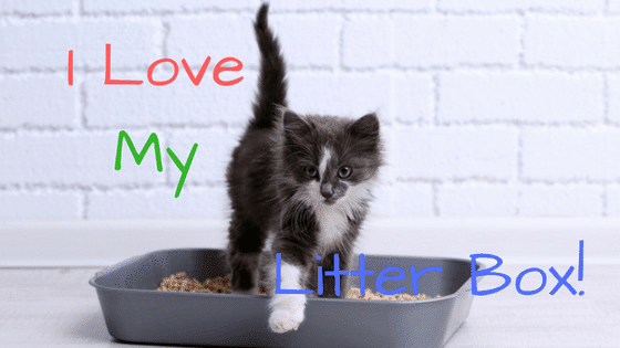 Exceptionnel Best Cat Litter Box