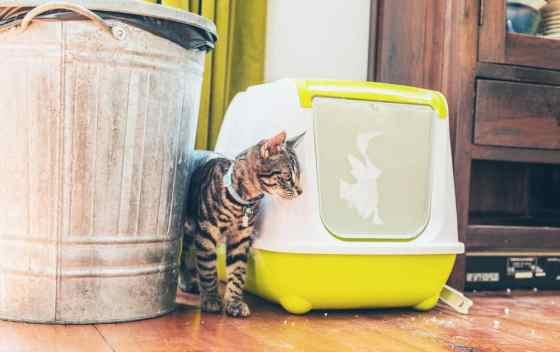 cat beside his litter box