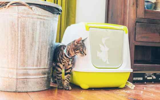 cat beside his litter box