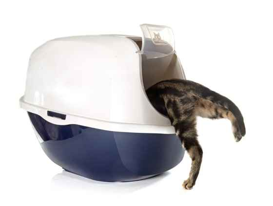 cat going inside an automatic litter box