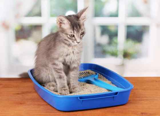 cat sitting on a litter box