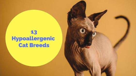 13 Hypoallergenic Cat Breeds