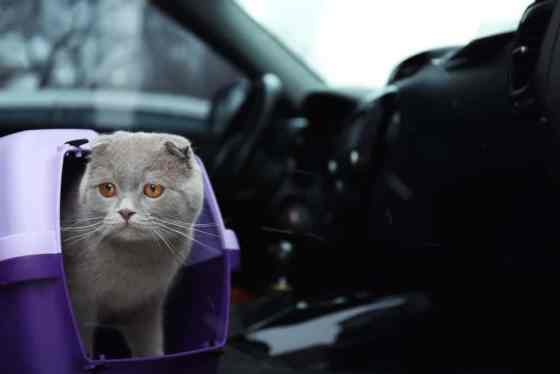 cat in a carrier on car