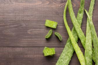Aloe vera for flea control