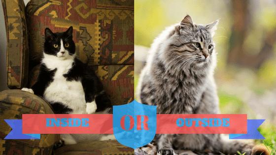 cat inside or outside