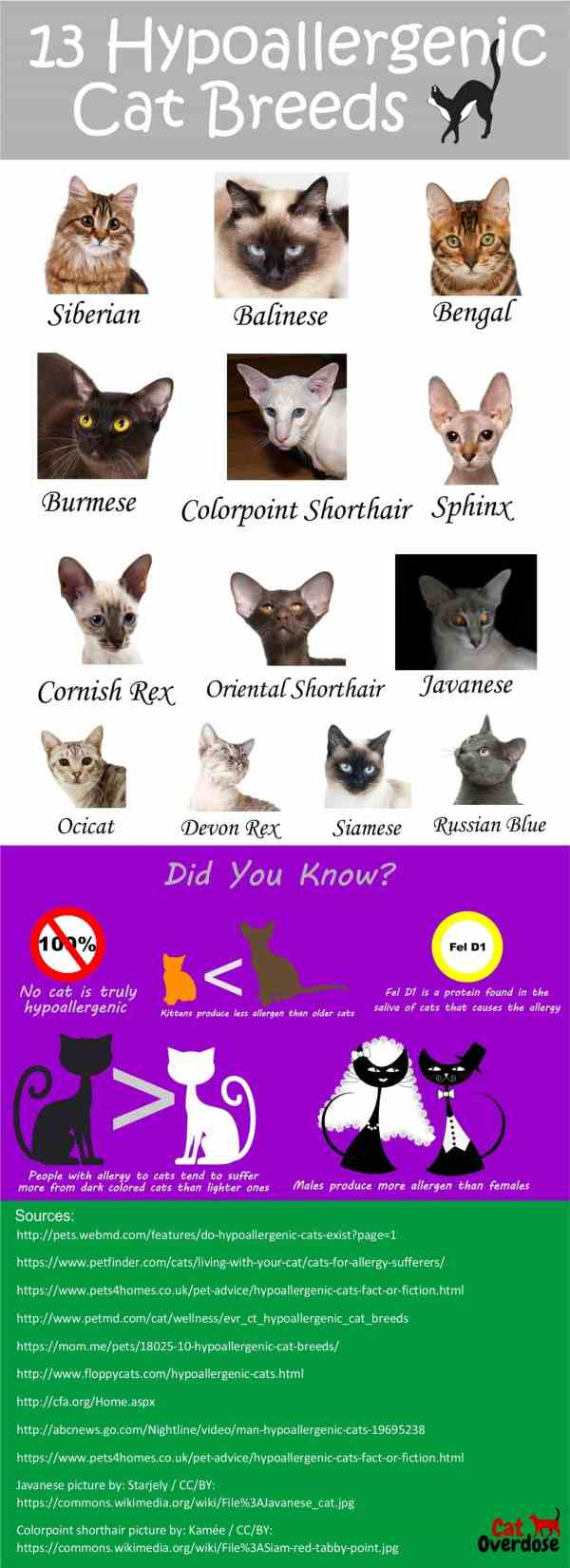hypoallergenic cat breeds infographic
