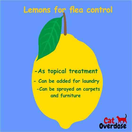 Lemon. lemons for flea control