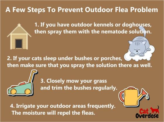 tips to prevent outdoor flea problems