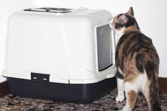 cat litter mat review