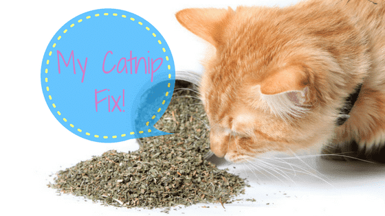 best catnip