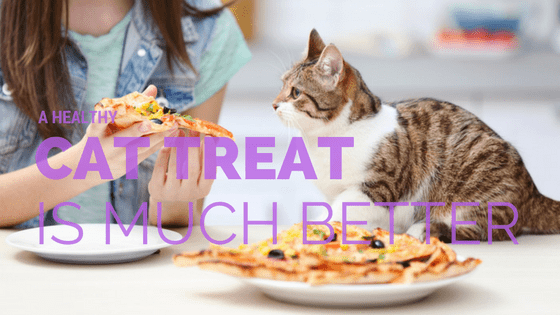 Best healthy cat treats