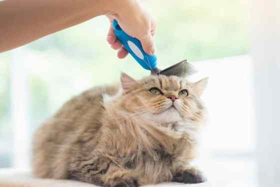 Cat brush for shedding review