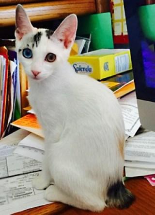 wild bengal cat
