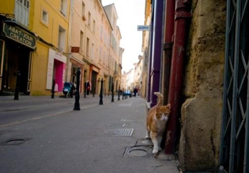 un chat dans la rue