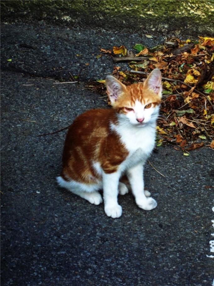 petit chat roux en bas de chez moi