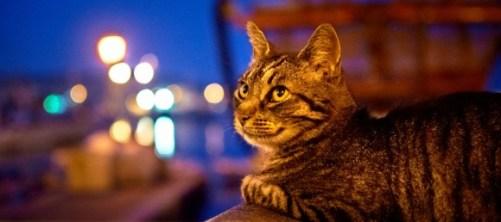un chat sans abris dans un port
