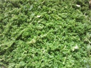 Fibres de feuilles de cassis
