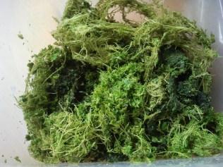 Fibres de feuilles de l'ortie, de plantain et de graines de plantain