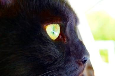 les yeux des chats Gis