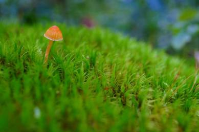 champignon dans la nature