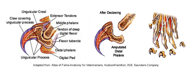 Diagram of surgical procedure; Photo credits
