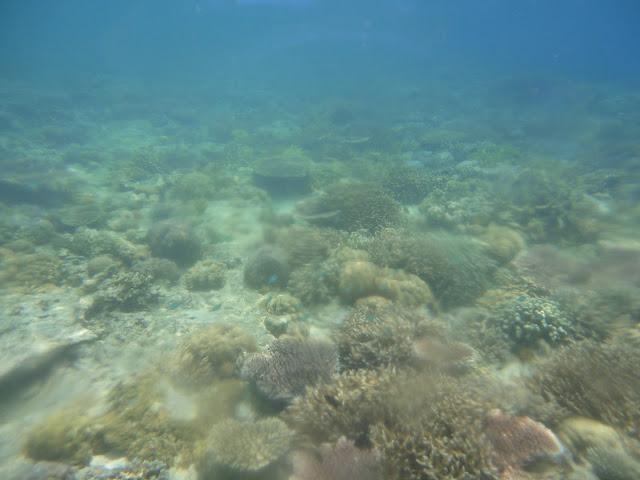 Saya paling suka snorkeling ketika visibility sedang bagus seperti ini