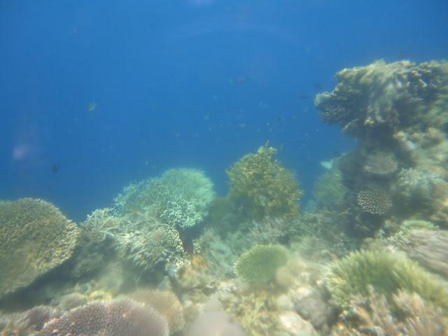 Terumbu karang yang kondisinya masih bagus sih didekat palung tadi ya.