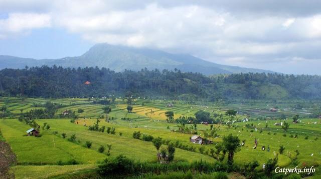 Yang paling suka sih, suasana alam Bali yang segar seperti ini ^^