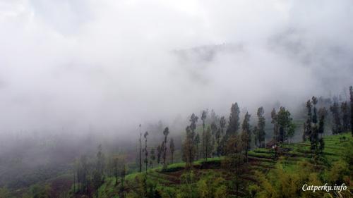 Kabut adalah komponen pelengkap yang menyempurnakan pemandangan di kawasan Taman Nasional Bromo Tengger Semeru.