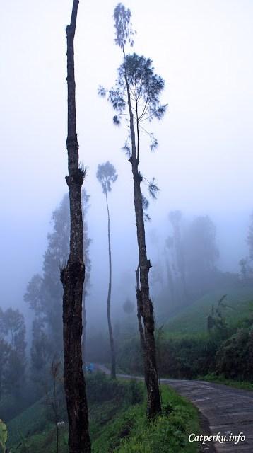 Namun melewati area Desa Ngadas saya harus sedikit berhati - hati karena kabut bisa datang dan pergi seenaknya :)