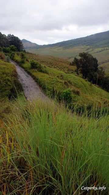 Melihat rumput hijau padang savana Bromo yang memanjakan mata.