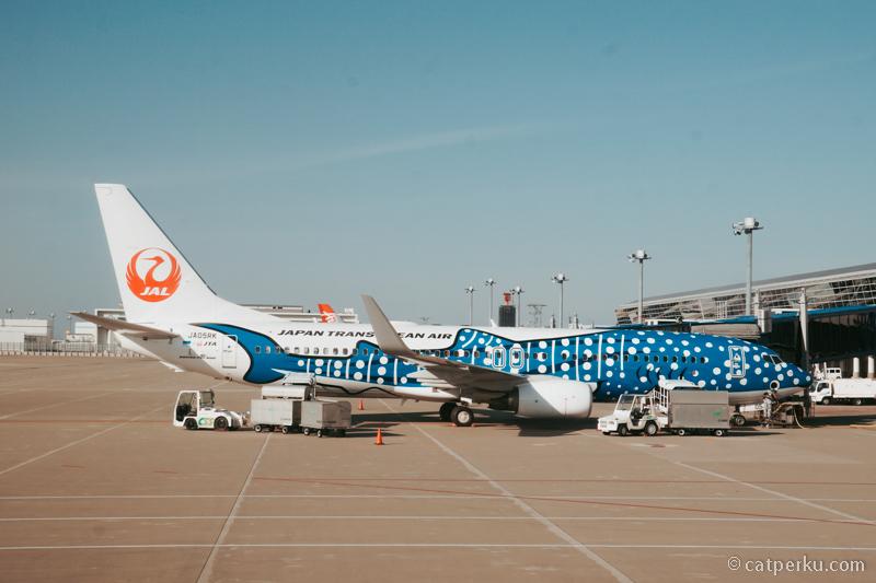 Ada hiu nempel di badan pesawat JAL. Saya foto di Nagoya International Airport.