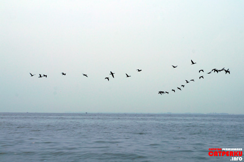 Asiiik! Pulang dari Pulau Untung Jawa dapat bonus bisa melihat formasi cantik para burung seperti ini ^^