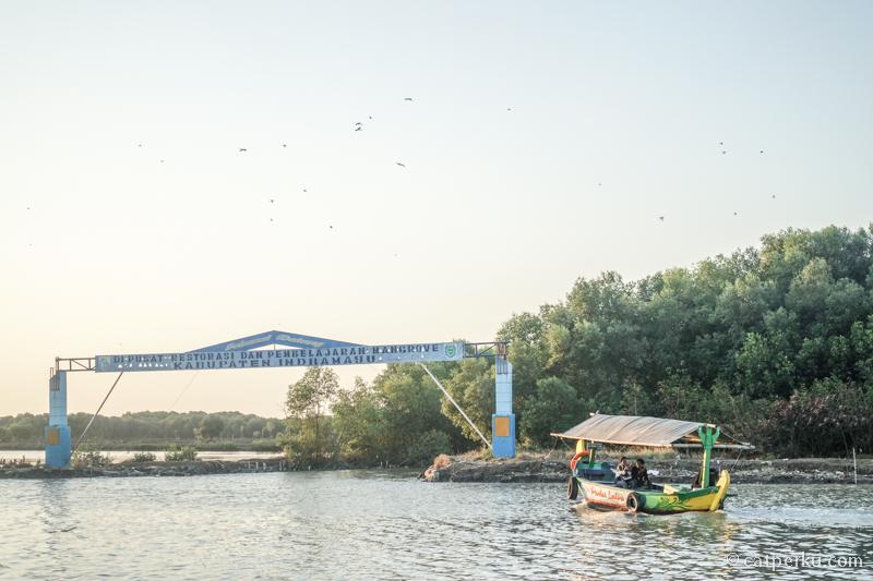Bisa naik perahu di Ekowisata Mangrove Karangsong