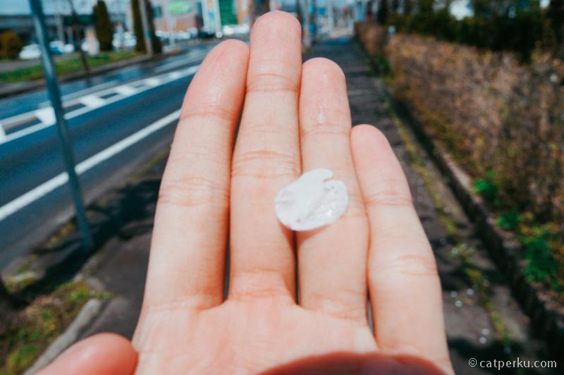 Bunga Sakura itu kayak gini lho, tapi ini saya enggak ngambil dari pohon yaa, saya ngambil dari yang sudah jatuh ke tanah.